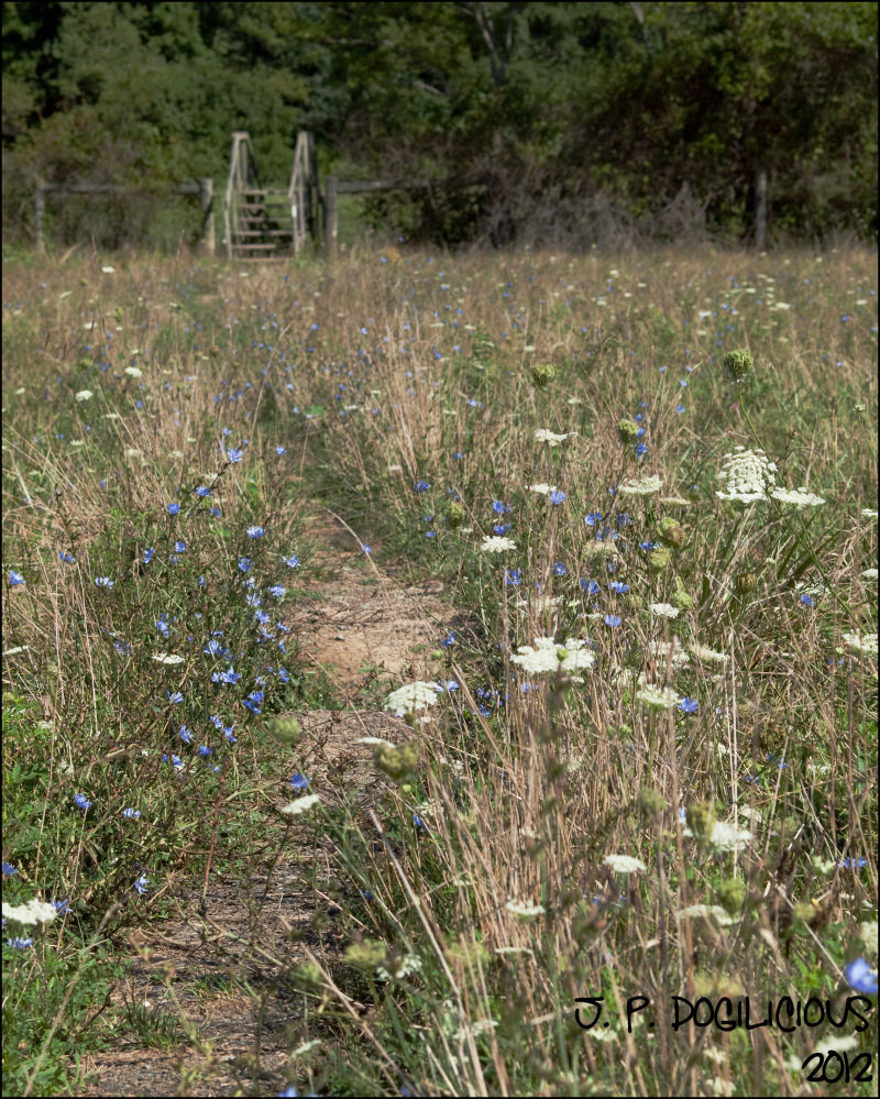 Wildflowers on the AT