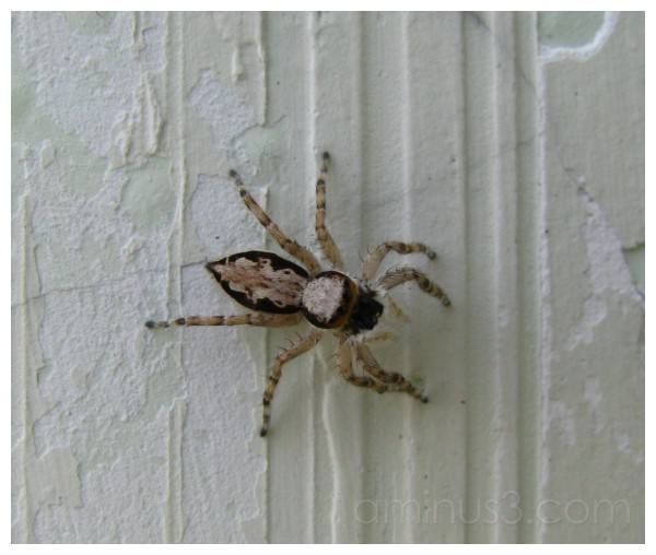 The Spider on the Wall
