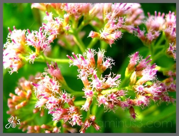 Flower#7