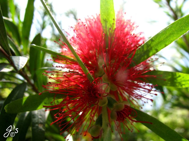 Flower#17