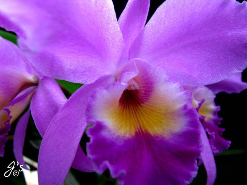 Flower#19