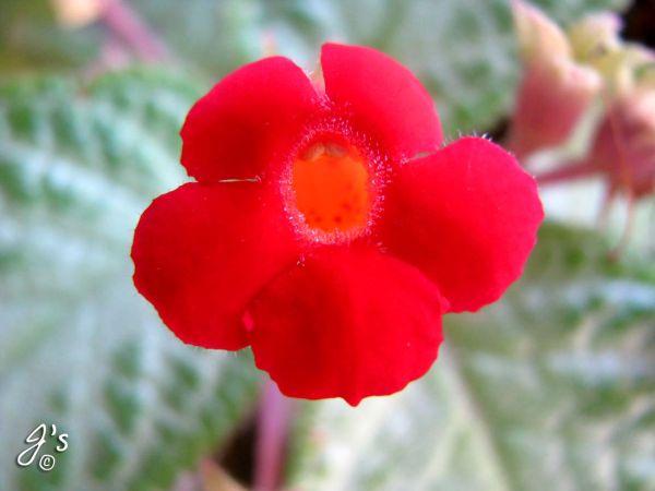 Flower#20