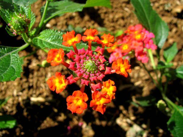 Flower#23