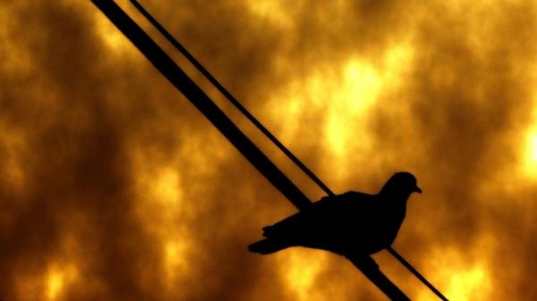 Sunset-birdie