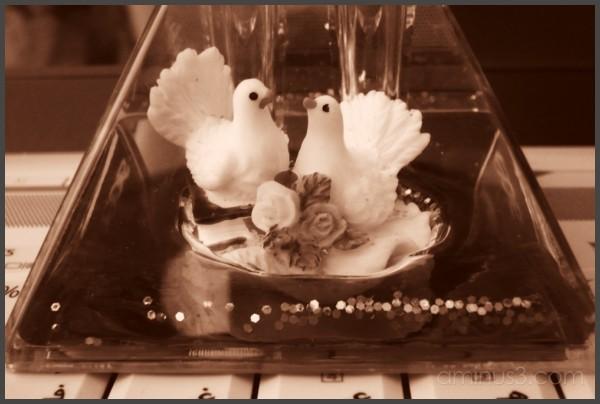 Lovebirds-II