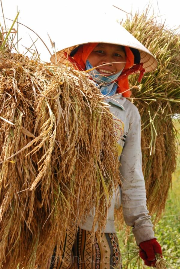 Farmer woman carrying wheat near Hue