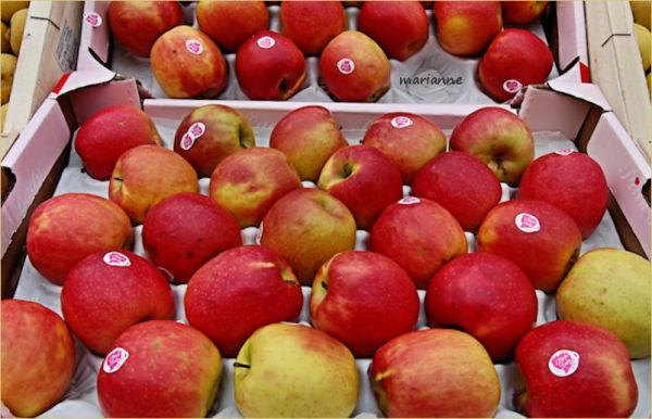 qui a croqué la pomme ???