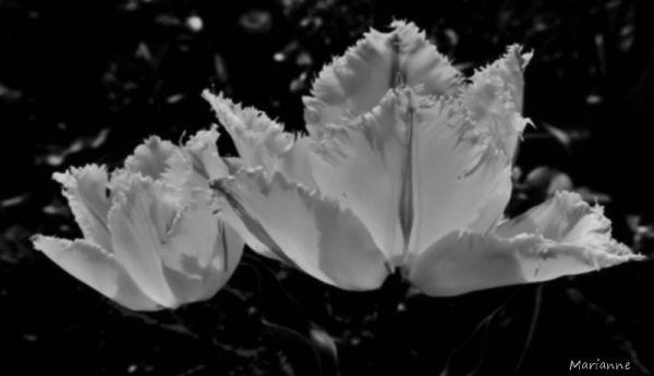 flower's soul... like a virgin ...