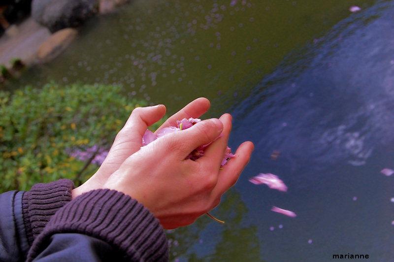 dans ses mains des pétales roses ...