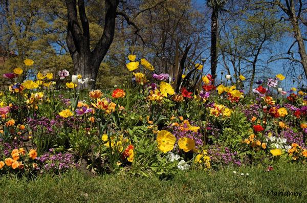il y avait un jardin qu'on appelait la terre ...