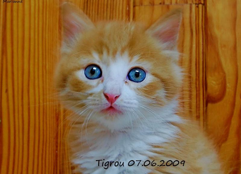 Tigrou / 1