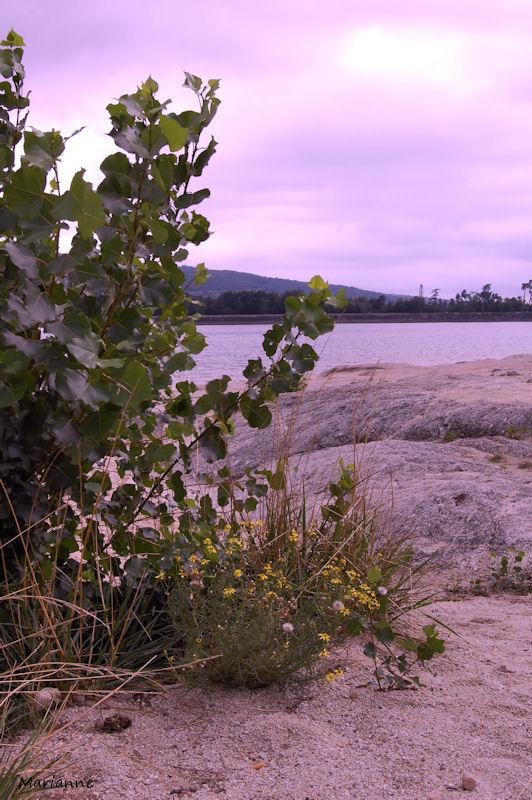 au bord du Lac de st Ferréol...