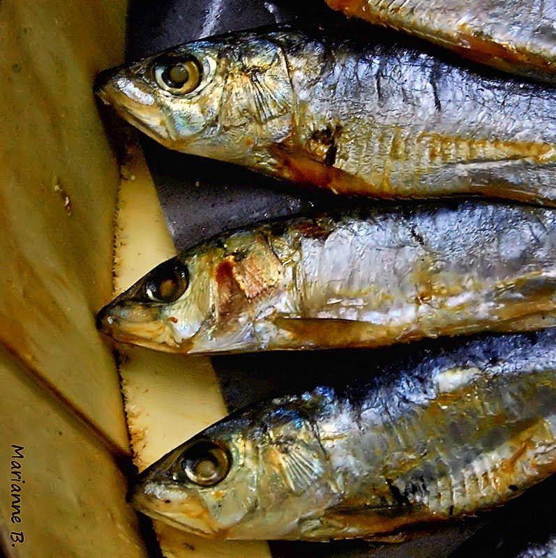 éventail de sardines de baril ....