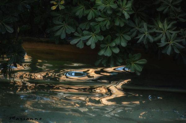 ... les yeux dans l'eau ...