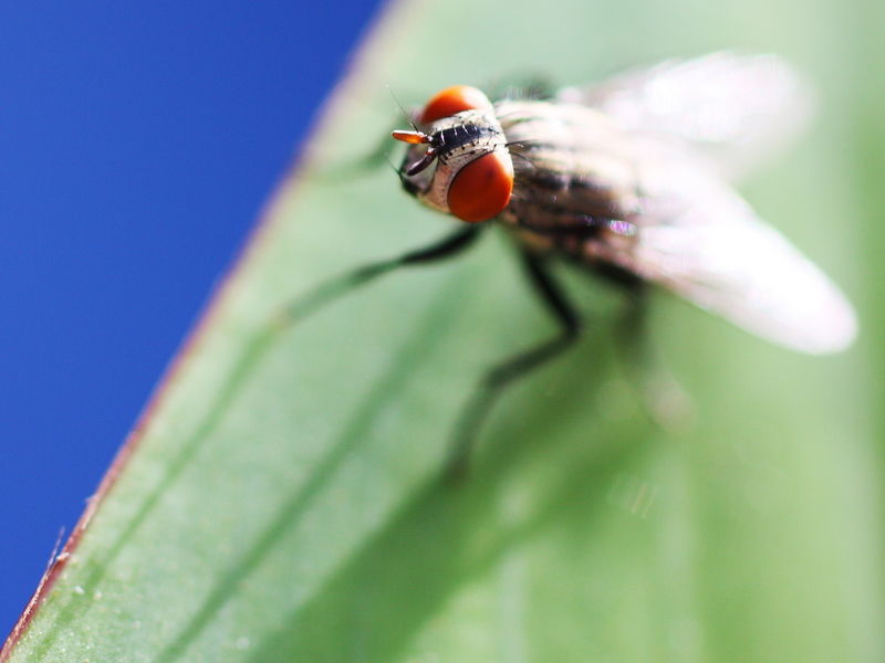 Flycatching -2