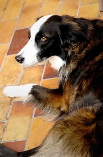 Dog on a Patio