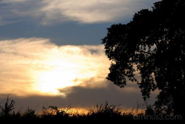 A Live Oak Tree at Sunset