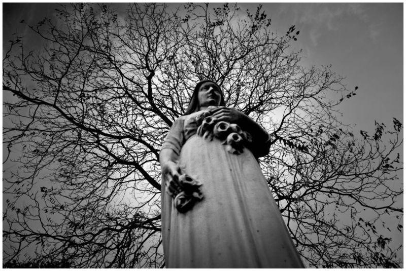 Maria's tree ...