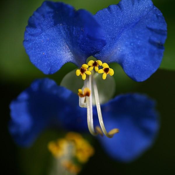 macro, fleur, nature