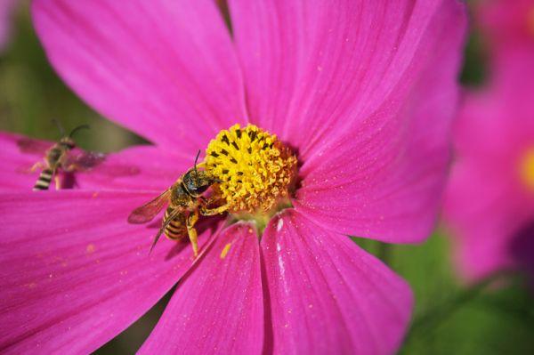 Encore des abeilles...