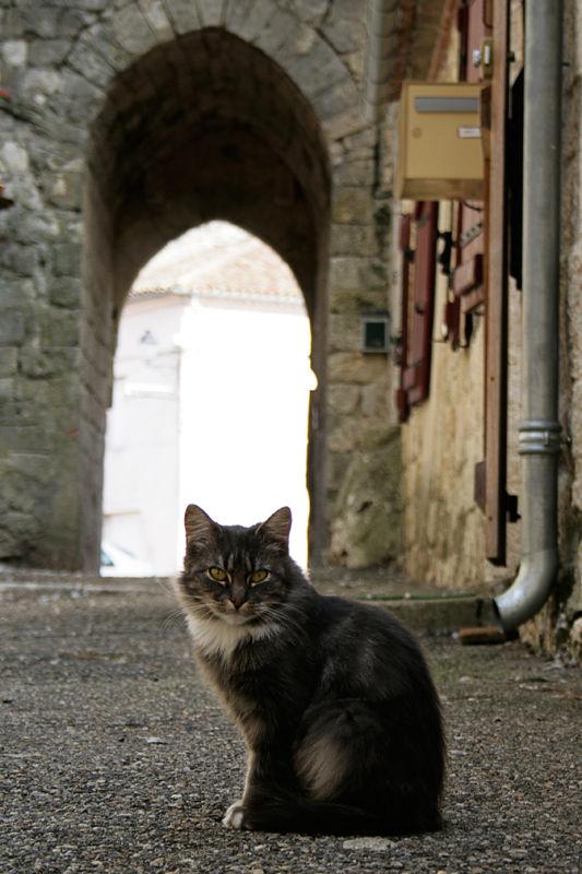 Le chat du village