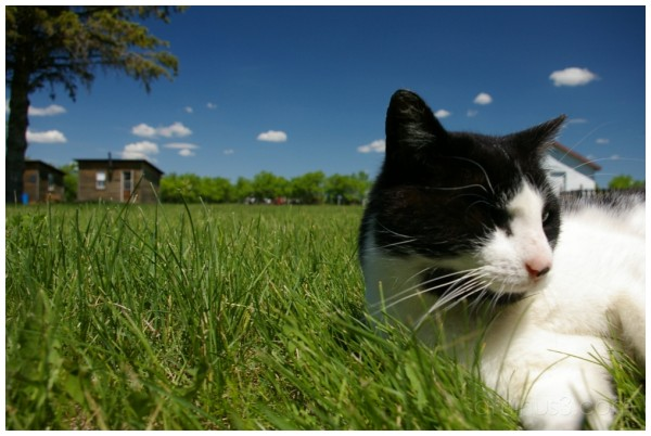 Cat Named Sukanen 2