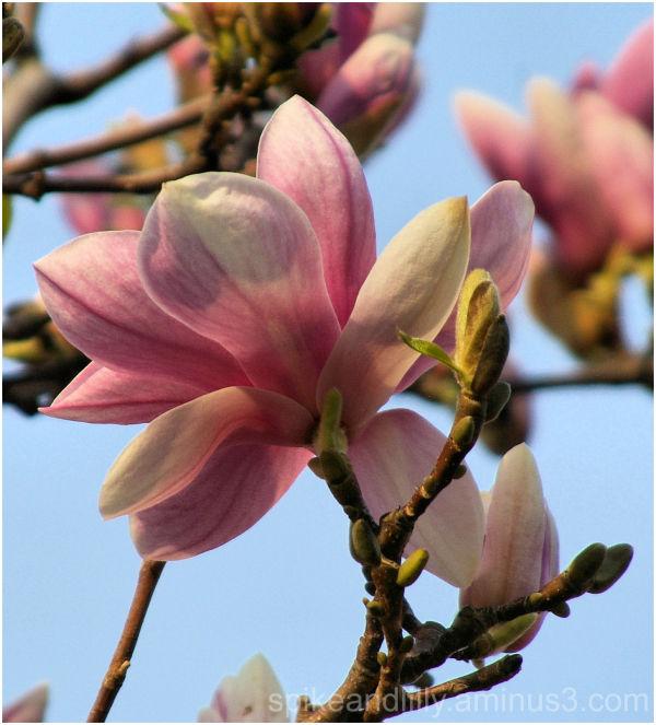 Spring Blooms 2