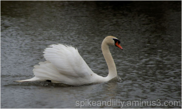 Gliding - Endless Rain 1