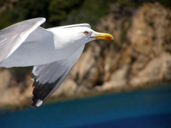 Freedom....