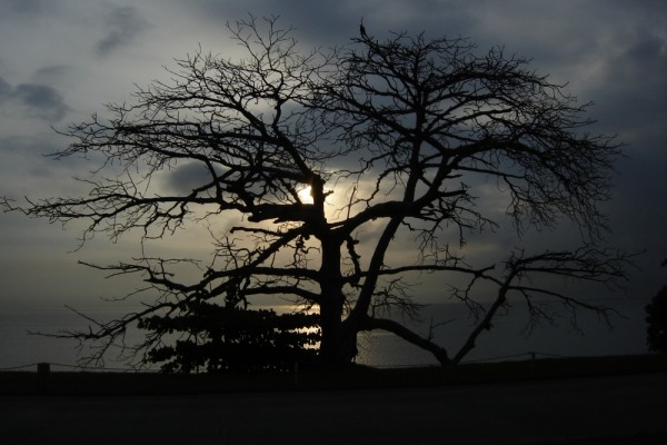 Photograph of tree in the morning, sunset, Panama