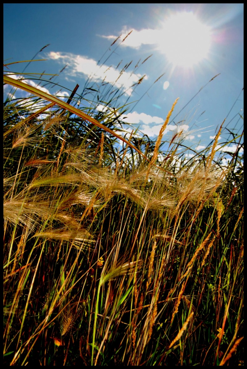 Grass where a house was