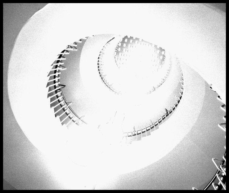 Bright Nautilus