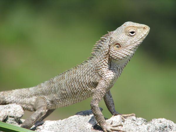A Reptile