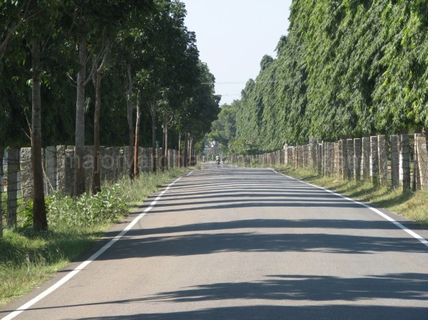 A green boulevard near Hesaraghatta, Bangalore
