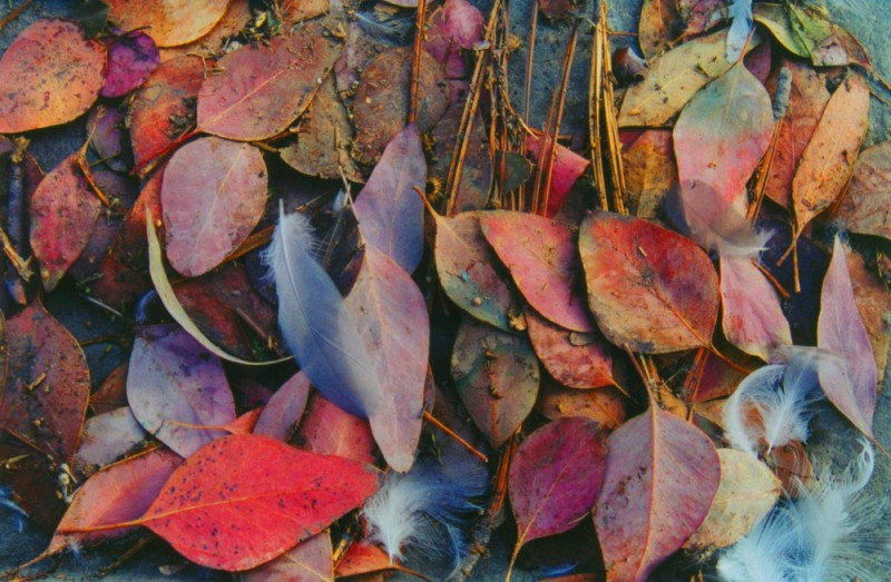 Mix of feathers and leaves in Carpinteria gutter.