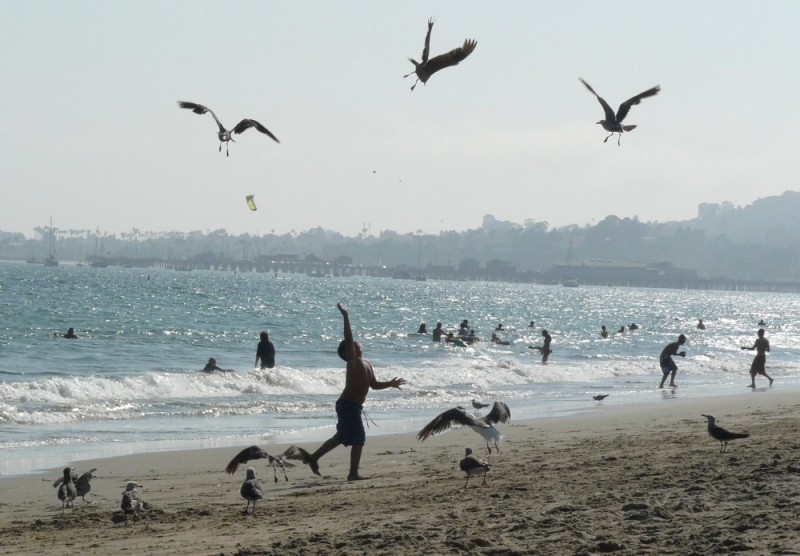Boy feeds Seagulls on Santa Barbara Beach, Calif.