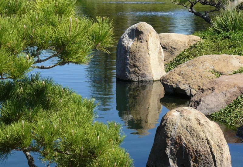 Watery Serenity of a Japanese Garden Lake & Pines