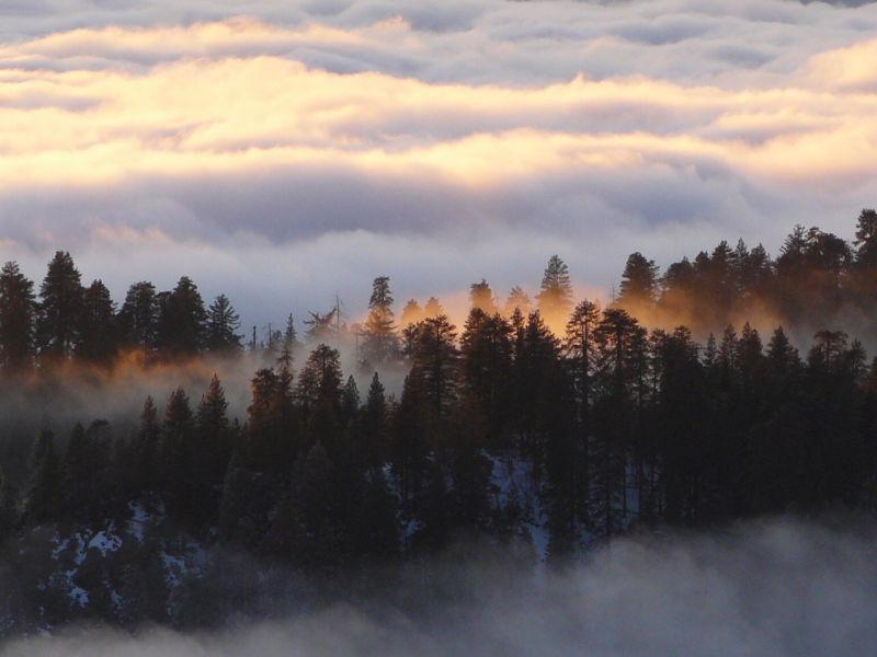 Emergent pine trees Sequoia Cloudbank sunset CA