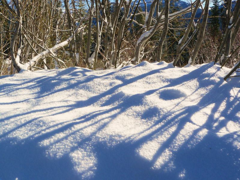 Blue shadows on the snowbank