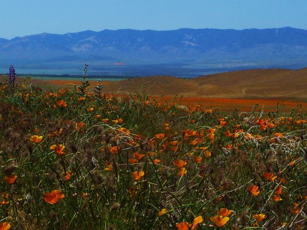 Vista in Lancaster at the Poppy Reserve