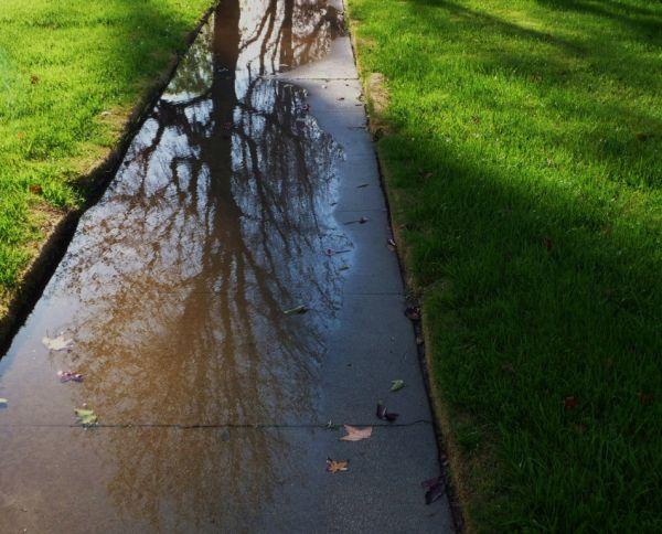 Reflections on a neighborhood walk