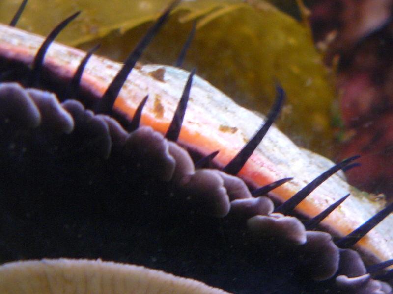 abalone cabrillo aquarium