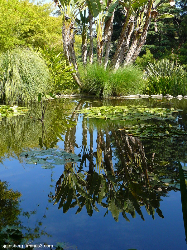reflection in Huntington Gardens pond