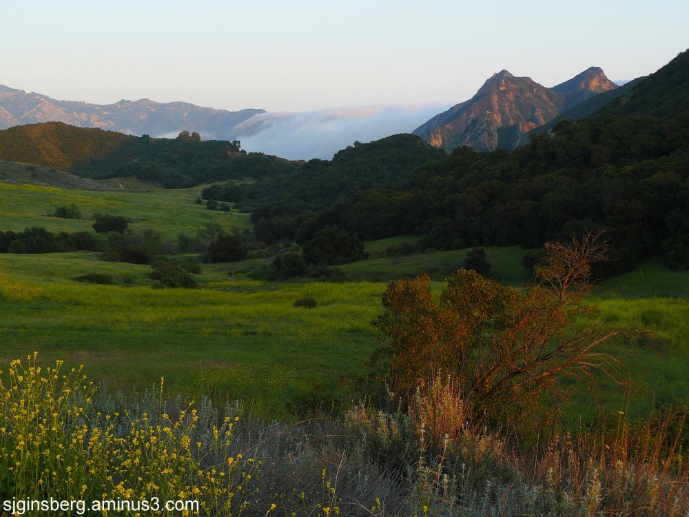 Cloud bank straming through Malibu Canyon