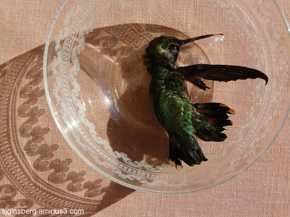 dead hummingbird in a crystal bowl
