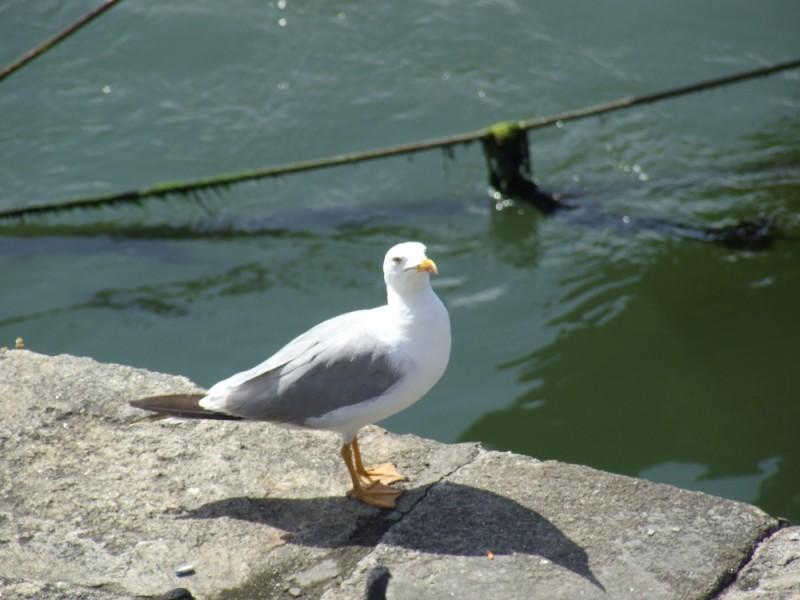 O olhar de uma gaivota