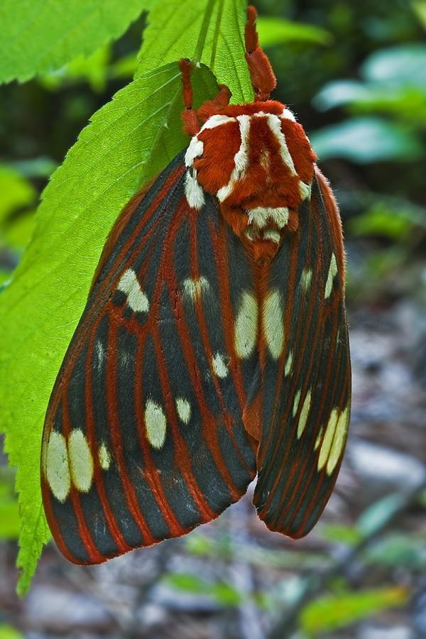 41 - Moth