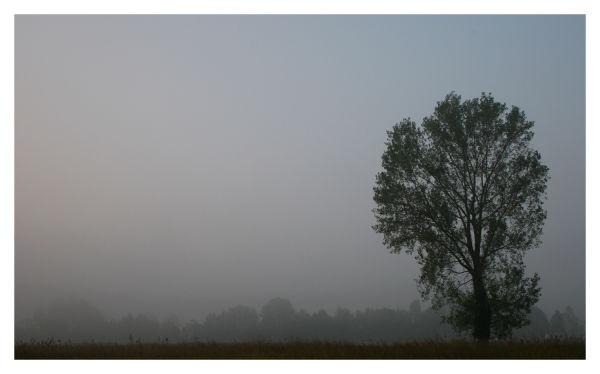 Fog in Lodi