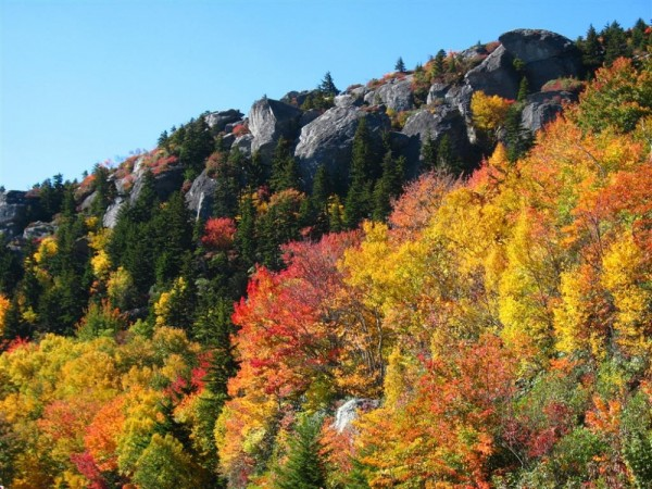 fall at grandfather mountain