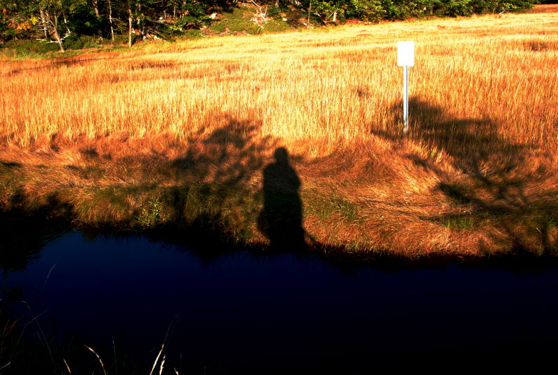 Tall Grass shadow